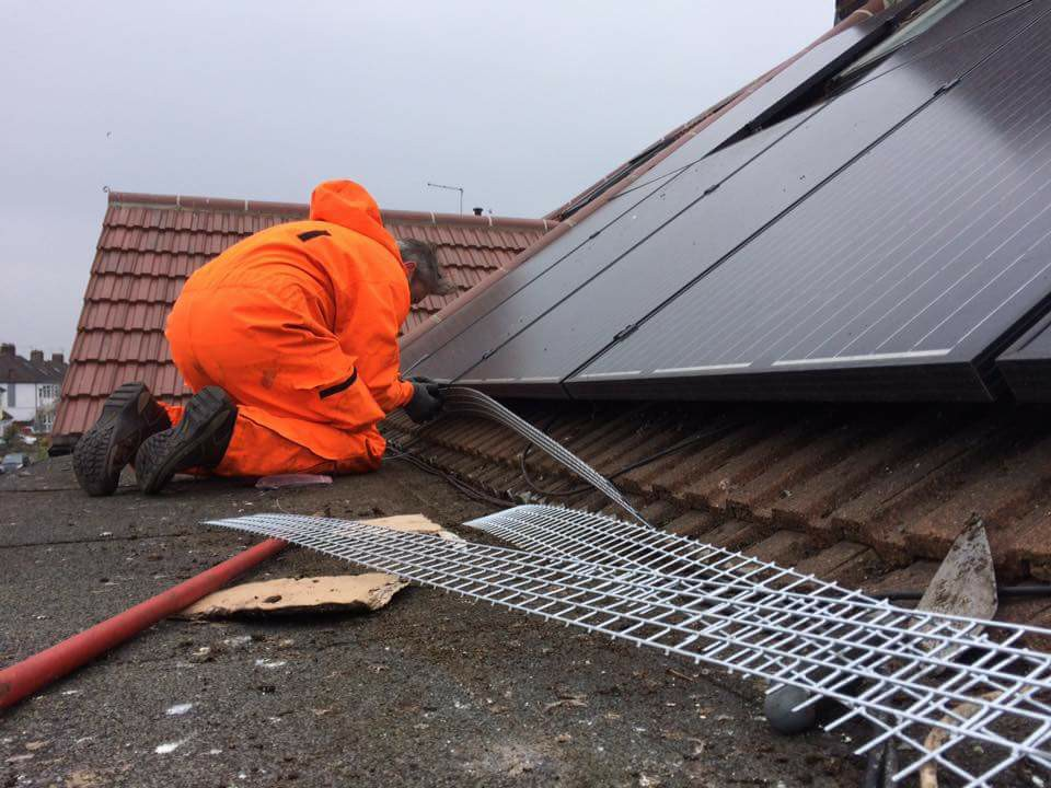 solar panel proofing for pigeons