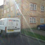 Residential Pest Control Essex
