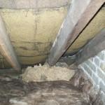 Wasps Nest In Corner
